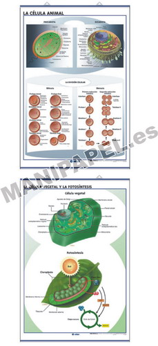LÁMINAS DE ANATOMÍA SECUNDARIA INGLÉS ED-1333 The Animal cell / The plant cell and Photosynthesis