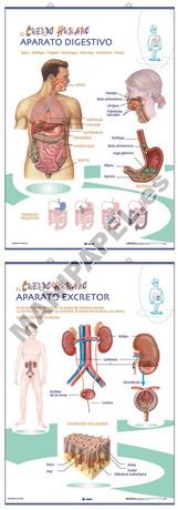 LÁMINAS DE ANATOMÍA PRIMARIA CASTELLANO ED-1318 Aparato Digestivo / Aparato Excretor