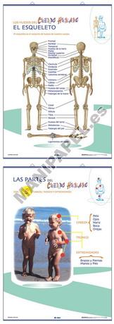 LÁMINAS DE ANATOMÍA PRIMARIA CASTELLANO ED-1319 Esqueleto / Partes del Cuerpo