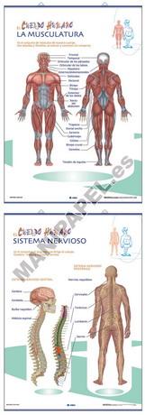 LÁMINAS DE ANATOMÍA PRIMARIA CASTELLANO ED-1321 Sistema Muscular / Sistema Nervioso