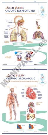LÁMINAS DE ANATOMÍA PRIMARIA CASTELLANO ED-1323 Aparato Circulatorio / Aparato Respiratorio