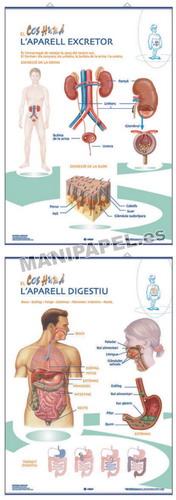 LÁMINAS DE ANATOMÍA PRIMARIA CATALÁN ED-1341 Aparell Digestiu / Aparell Excretor