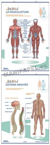 LÁMINAS DE ANATOMÍA PRIMARIA CATALÁN ED-1344 Muscular / Nerviós