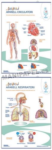 LÁMINAS DE ANATOMÍA PRIMARIA CATALÁN ED-1346 Respiratori / Circulatori