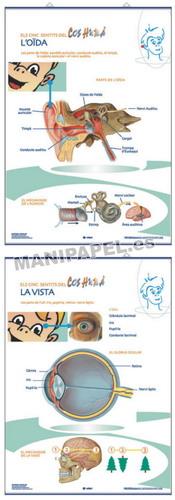 LÁMINAS DE ANATOMÍA PRIMARIA CATALÁN ED-1347 La Vista / L' Oïda