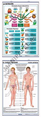 LÁMINAS DE ANATOMÍA SECUNDARIA CASTELLANO ED-908 La Nutrición / El Cuerpo Humano