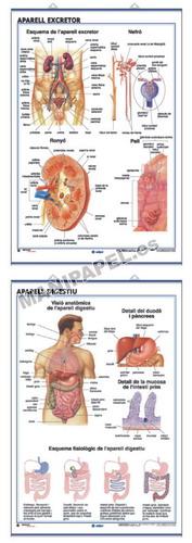 LÁMINAS DE ANATOMÍA SECUNDARIA CATALÁN ED-910 Aparell Digestiu / Aparell Excretor