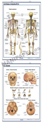 LÁMINAS DE ANATOMÍA SECUNDARIA CATALÁN ED-911 Sistema Esquelètic / El Crani