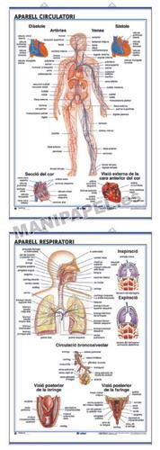 LÁMINAS DE ANATOMÍA SECUNDARIA CATALÁN ED-913 Aparell Circulatori / Aparell Respiratori