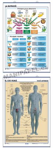 LÁMINAS DE ANATOMÍA SECUNDARIA CATALÁN ED-918 La Nutrició / El Cos Humá