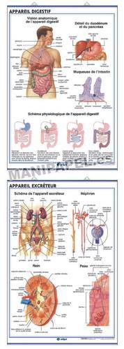 LÁMINAS DE ANATOMÍA SECUNDARIA FRANCÉS ED-920 Appareil Digestif / Appareil Excréteur