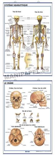 LÁMINAS DE ANATOMÍA SECUNDARIA FRANCÉS ED-921 Système Squelettique / Le Crâne