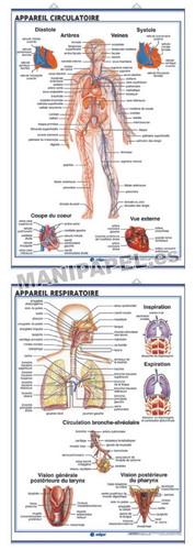 LÁMINAS DE ANATOMÍA SECUNDARIA FRANCÉS ED-923 Système Circulatoire / Appareil Respiratoire