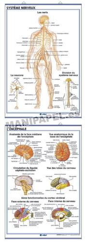 LÁMINAS DE ANATOMÍA SECUNDARIA FRANCÉS ED-927 Système Nerveux / Le Cerveau