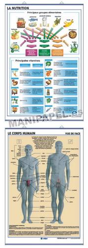 LÁMINAS DE ANATOMÍA SECUNDARIA FRANCÉS ED-928 La Nutrition / Le Corps Humain