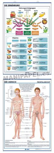 LÁMINAS DE ANATOMÍA SECUNDARIA ALEMÁN ED-931 Die Ernährung / Der Mensch Frontalansicht