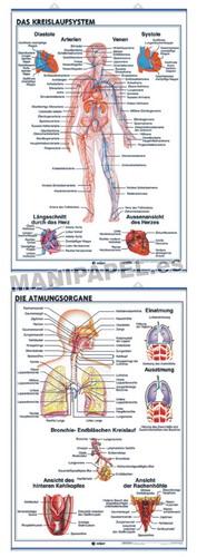 LÁMINAS DE ANATOMÍA SECUNDARIA ALEMÁN ED-936 Das Kreislaufsystem / Die Atmungsorgane
