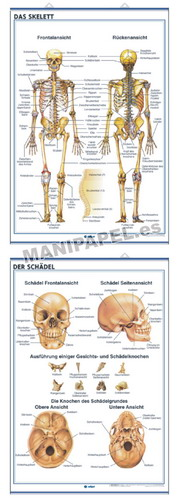 LÁMINAS DE ANATOMÍA SECUNDARIA ALEMÁN ED-938 Das Skelett / Der Schädel