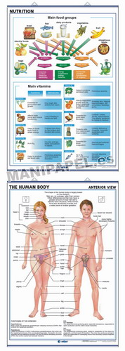 LÁMINAS DE ANATOMÍA SECUNDARIA INGLÉS ED-948 Nutrition / The Human Body