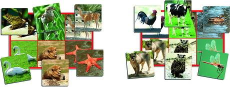 JUEGOS CON FOTOGRAFÍAS ANIMALES